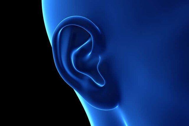پرورش گوش شبیه به گوش انسان با چاپ 3بعدی در بدن موش ها